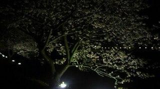 20110207ライトアップさくら.jpg